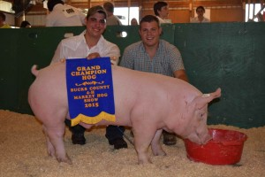 champion hog