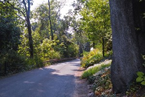 Old Mill Road in New Hope