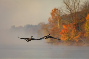 """Fall Morning"" by Jerry Fuqua"