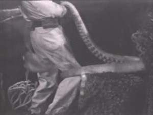 Octopuses were anathema to 1950s TV hero Diver Dan.