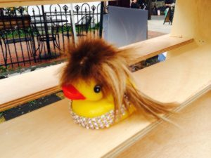 Fowl play -- Tina Turner duck.