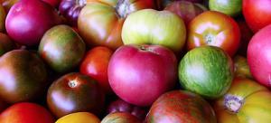 tomatoes - new hope free press